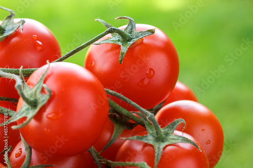 Lovely fresh small red tomatoes on the vine.