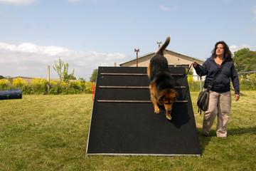 Frau trainiert Hund im Agility