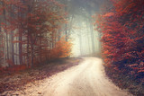 Dreamy forest road