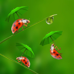 Funny picture from nature. Little ladybugs skydiving.