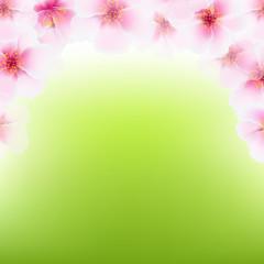 Pink Cherry Flower Frame