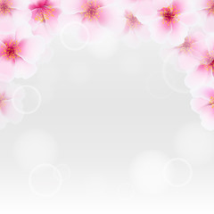 Cherry Flower Border With Blur