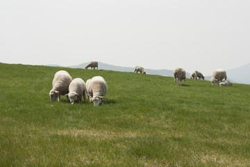 양떼목장 풍경
