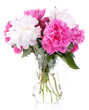 Beautiful pink and white peonies in vase, isolated on white