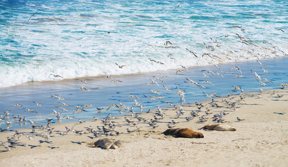 sea lions and seagulls