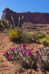 Beautiful Wild flowers near the White Rim Road Utah