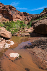 Pool of water - Hunter Canyon Hiking Trail Moab Utah