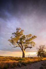 Flinders Tree