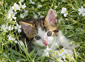 cute kitten in a flower bed