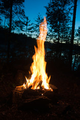 Bonfire night in the woods