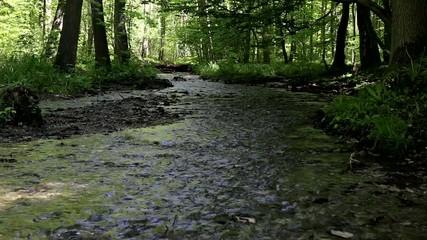 Bach in einem Wald