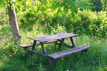 Old wooden bench in forest