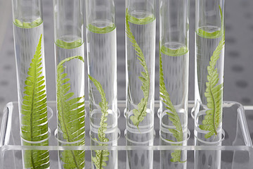 Plant grows in test tube concept of similarity, and cloning