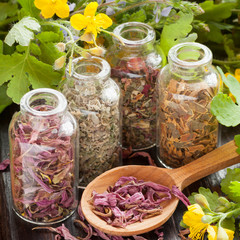 herbs in glass bottles, dried healthy plants in wooden spoon
