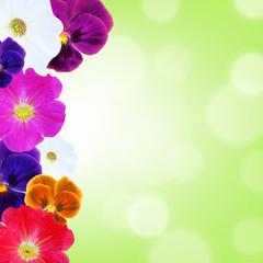 Flower Border With Bokeh