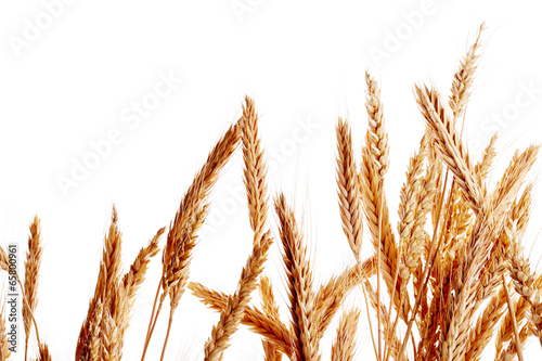 Ears of wheat isolated on white background - 65800961
