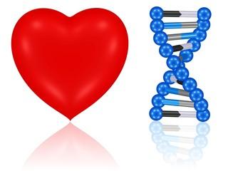 Herz und DNA-Molekül