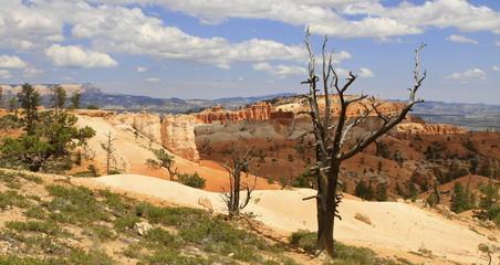 queen's garden, Bryce canyon