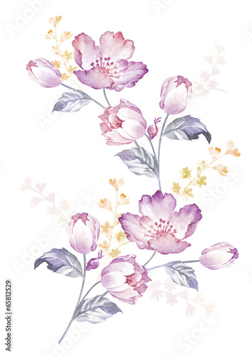 watercolor illustration flowers in simple background - 65812529