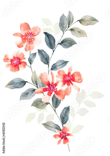 watercolor illustration flowers in simple background - 65812542