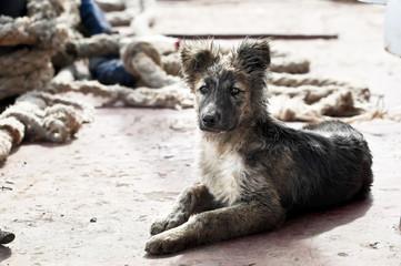 Little dog in a shipyard