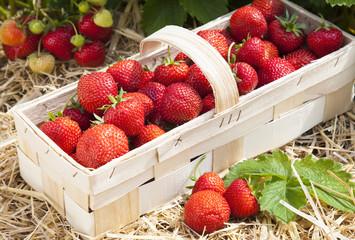 Geflochtener Korb mit Erdbeeren