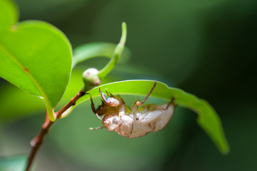 Insect under a leaf