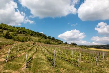 Vignoble de Boudes, Puy de Dôme