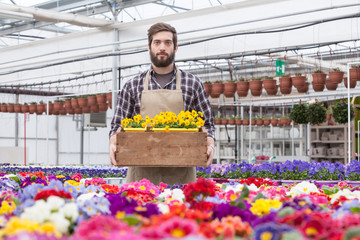 Young male worker carrying potted flower in tray at greenhouse