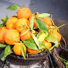 Orangen im Korb
