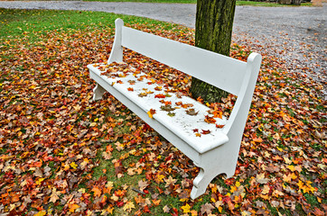 Park Bench Among Leaves