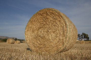Hay bales in farmer's field