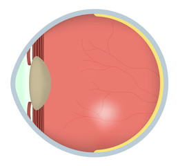 Eye Cross Section