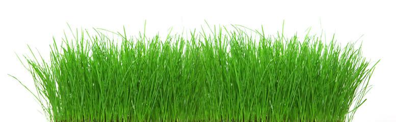 Freigestelltes Gras