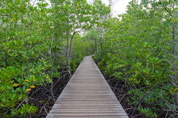 Wooden pathway in mangrove forest ,chanthaburi thailand
