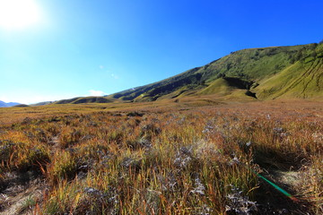 Savanna at Mount Bromo volcanoes