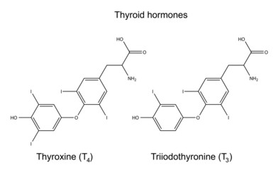 Structural chemical formulas of thyroid hormones