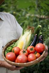夏野菜の収穫を喜ぶシニア