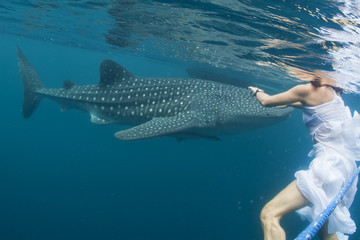 Whale Shark very near a snorkelist