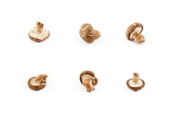 chinese mushroom