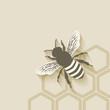 Obrazy na płótnie, fototapety, zdjęcia, fotoobrazy drukowane : bee honeycomb background