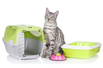 Bengal Katze mit Katzen Grundausstattung