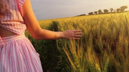 Elegant Young Female Hand Caressing Wheat Field Slow Motion