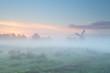 windmill silhouette in dense morning fog