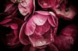 Peony flowers - 65855749