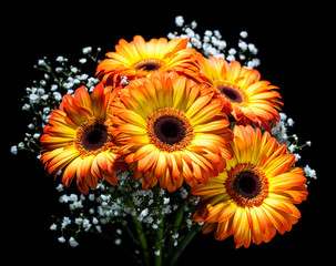 Bouquet of gerbera on black.