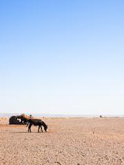 モロッコのロバ