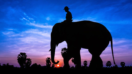 Man and elephant on twilight time