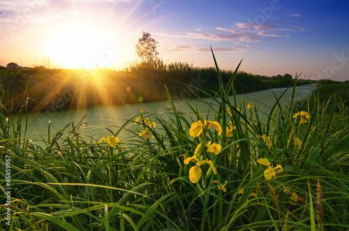 Fototapeta Rural sunset
