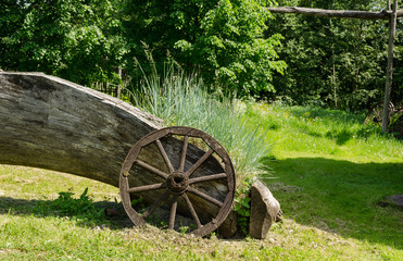 sedges grow near old wooden carriage wheel